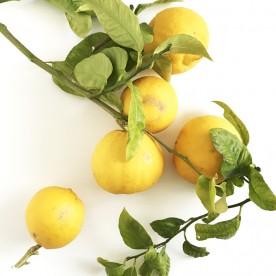 Bergamotto frutto fresco